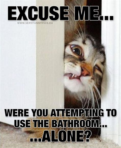 how often should you use the bathroom how often do cats go to the bathroom 28 images why do