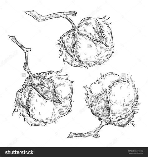 cotton plant drawing google search king cotton