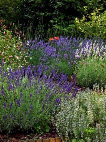 progetti piccoli giardini oltre 25 fantastiche idee su idee per progettazione di
