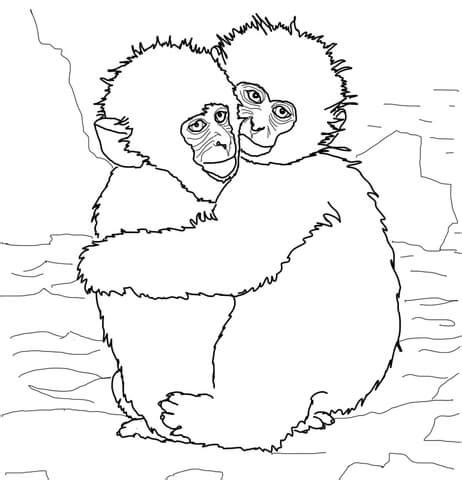 colobus monkey coloring page hugging snow monkeys coloring page free printable