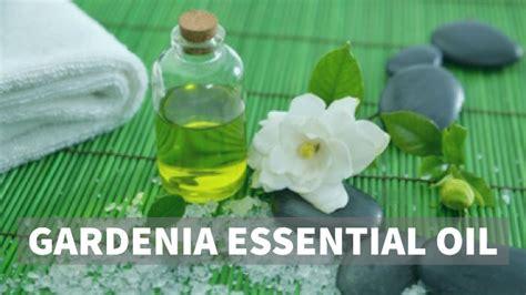 Gardenia Essential Gardenia Essential Benefits Heavenly Aroma Herbs