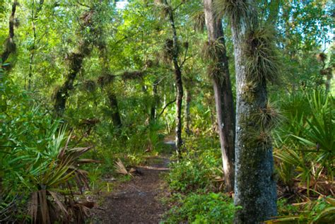 redwood gardens
