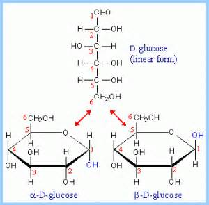 d form carbohydrates bcreader its never late to learn something new