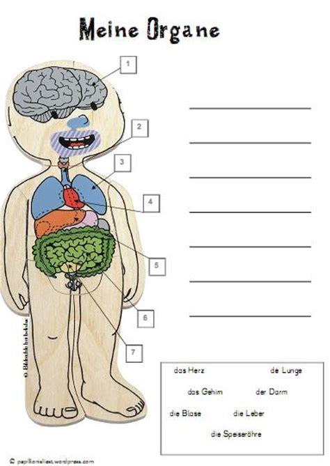 innere organe des menschen schaubild 301 moved permanently