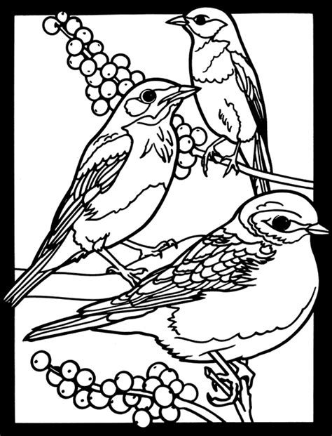 eastern bluebird coloring page welcome to dover publications