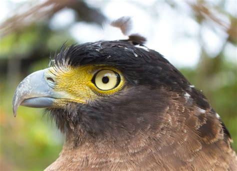 common eye disorders in birds petmd