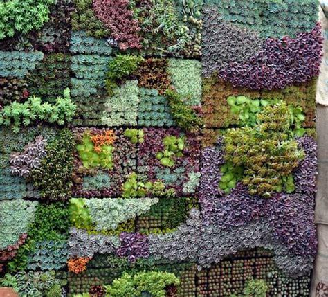 Succulents Vertical Garden Sedum And Succulent Planters The Garden Glove