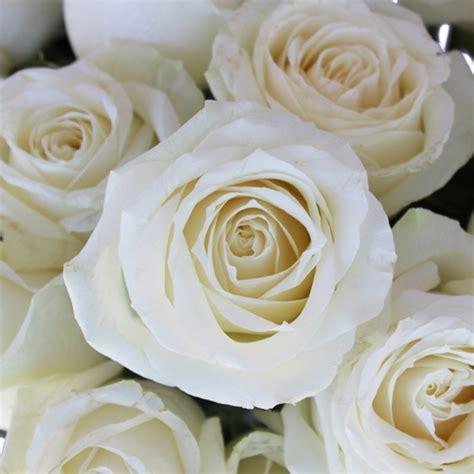 Vintage Flower Vases Wholesale Avalanche White Rose