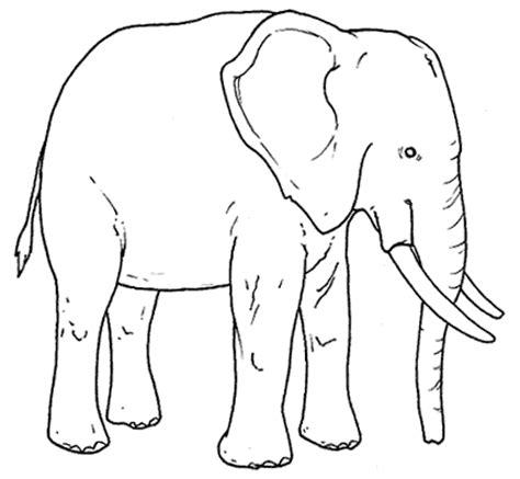 imagenes de elefantes faciles para dibujar dibujos para imprimir y colorear elefante para colorear
