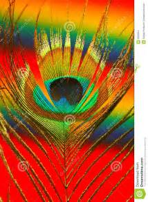 3d Interior Designers colorful peacock feather stock images image 6509554