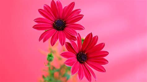imagenes flores en hd fondos de pantalla de flores hd fondos de pantalla y