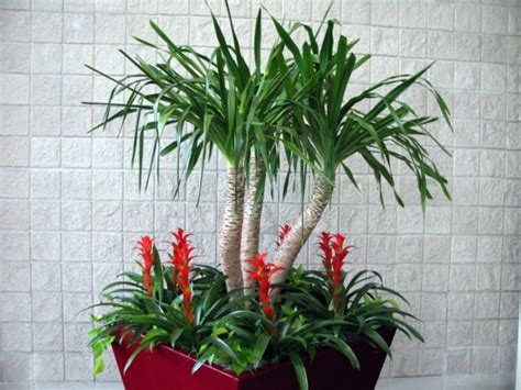 Indoor palm images ? which are the typical types of palm