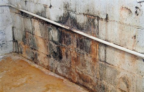 basement mold tech report kill how to kill mold and stay healthy stevemaxwell castevemaxwell ca
