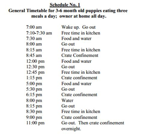 puppy schedule lab puppy feeding chart breeds picture