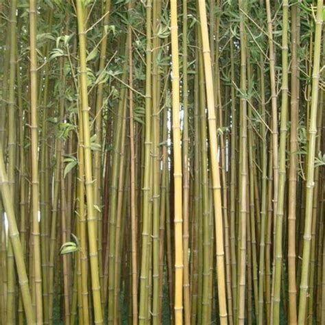 real outdoor trees real trunk bamboo artificial bamboo tree for outdoor wall