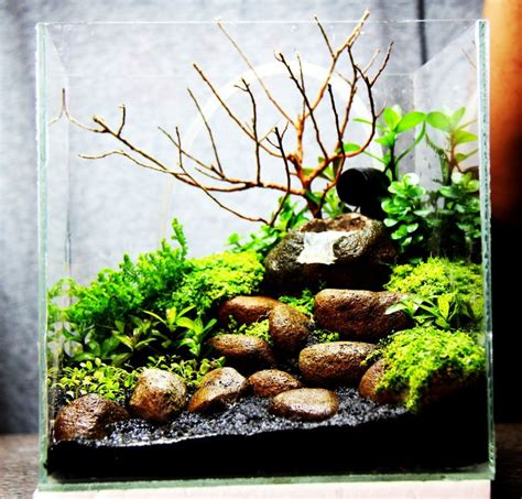 small aquarium aquascape 1000 images about freshwater aquariums on pinterest