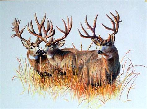 mule deer tattoo designs 31 best cool deer tattoos images on deer