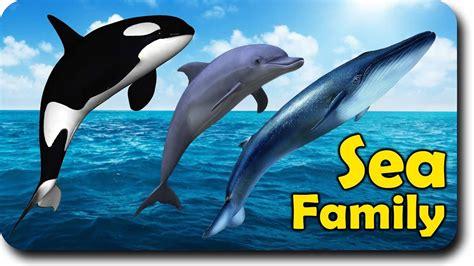 killer whale bath sea animal finger family nursery rhyme whale orca killer