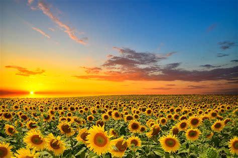 imagenes sol 4k girasole sol naturaleza flores wallpaper 4927x3264