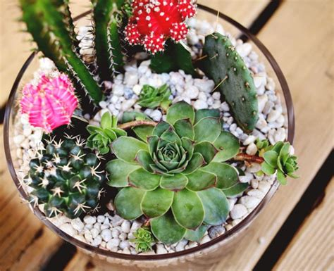 cactus garden ideas diy projects simple cactus garden ideas home design and