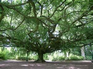 jardins bayeux jardin de bayeux calvados normandie