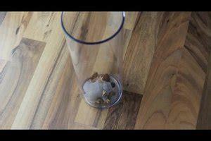 mit was mäuse fangen mausefallen selber bauen so gelingt eine lebendfalle