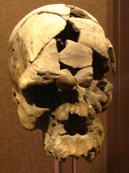 preguntas cerradas de la prehistoria homo sapiens adaltu 160 000 years old national museum