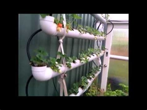 Pvc Pipe Strawberry Planter by Strawberry Planter System Using 90mm Water Pipe