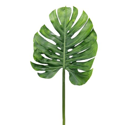 Poster Set Of 2 Tropical Leaves Cactus 2xa4 monstera leaf zoeken leafs