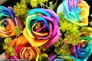 different colored roses what multi colored roses you say s daily