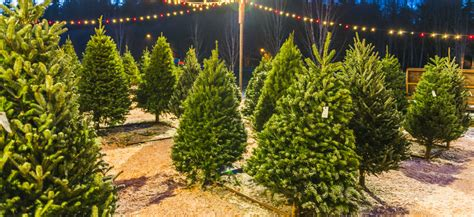 christmas tree farms mobile oahu honolulu events 2017 things to do for the holidays thrillist