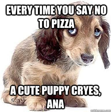 Cute No Meme - every time you say no to pizza a cute puppy cryes ana
