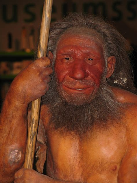 first man the life file neandertaler reconst jpg wikipedia