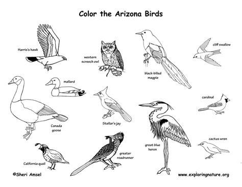 sora bird coloring page 85 sora bird coloring page kingdom hearts coloring