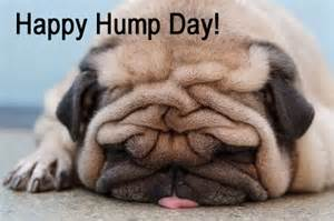 happy pug day nutritional facts on mitt romney and other hump day funnies motley news