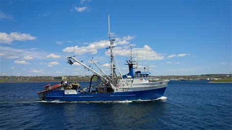 boat sales halifax few surprises in report on health of fish stocks