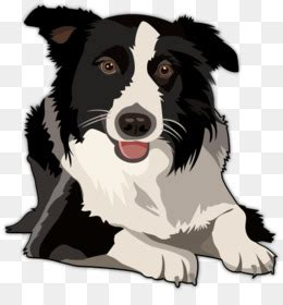 border collie bearded collie clip art border collie png