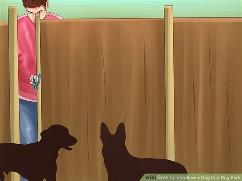 how to introduce a puppy to another how to introduce a to a park with pictures wikihow
