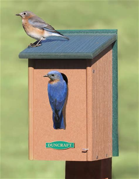 duncraft com eco strong bluebird house