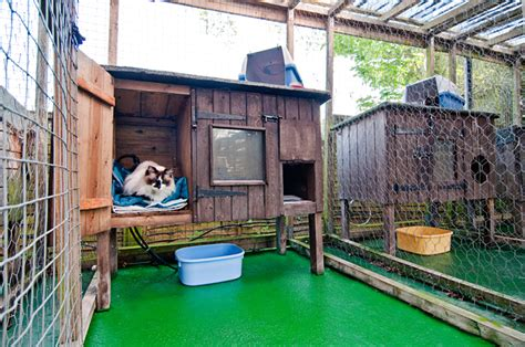 Home Design Images Gallery by Sereta Cattery Indoor Amp Outdoor Cattery South East London