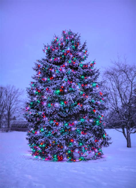 snowball lights for christmas tree tree with lights outside in snow stock image image 43367149