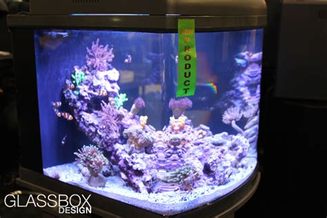 led lighting for zoanthids zoas turning brown coral forum nano reef com community