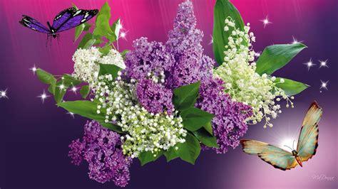 fiore con la z lill 224 farfalle hd wallpaper gratis grande schermo ad