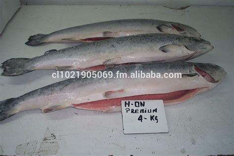 Kepala Salmon Beku chile atlantic salmon ikan id produk 50028356220