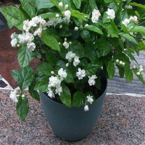 compre atacado  sementes pacote varanda vaso de flores