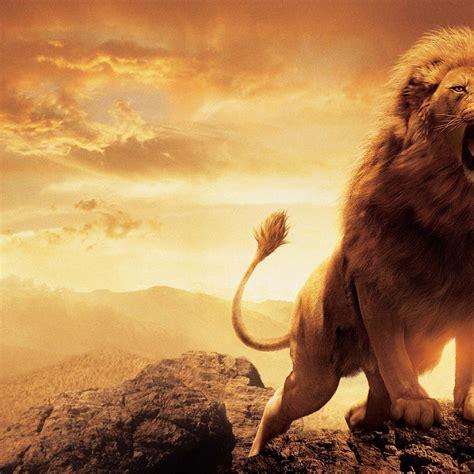 narnia lion ipad air hd  wallpapers images