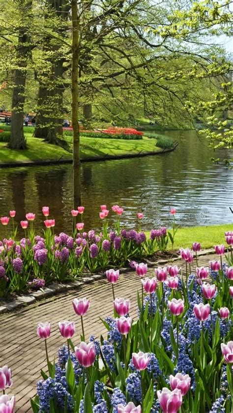top  beauty spring pictures flower garden photography