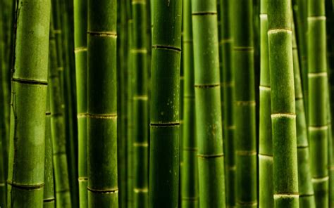 imagenes wallpaper bamboo bamboo desktop wallpaper