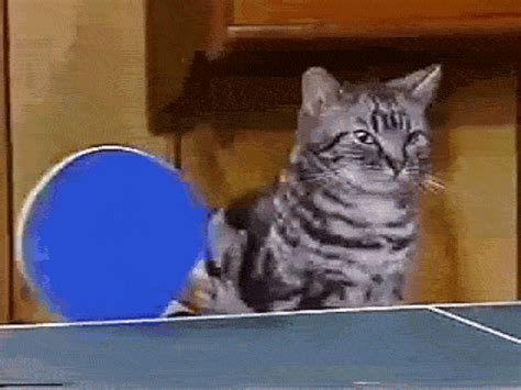 Cat Meme Gif - cat memes gif find share on giphy