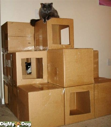 cat house i want to build this tomorrow obsessed with